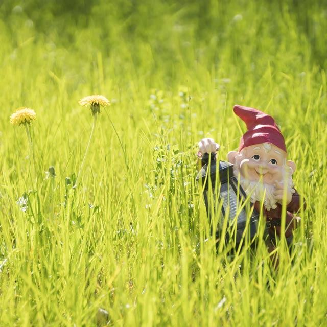Kern Gnome